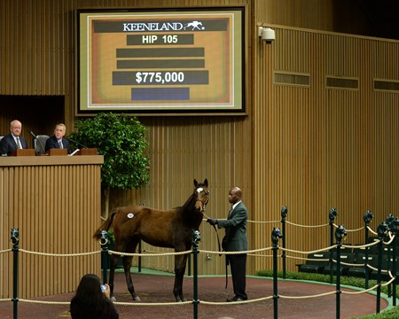2017 Keeneland November Sale Hip 105 filly by Tapit from My Conquestadory