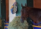 Mubtaahij at Del Mar ahead of the Breeders' Cup in November