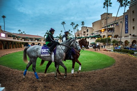 Unique Bella trained by Jerry Hollendorfer walks in the historic paddock early this morning Wednesday Nov. 1, 2017 at Del Mar Race Track in San Diego, CA. Unique Bella will appear in the Filly & Mare Sprint.