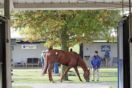 Hip 139, Zipessa,  2017 Fasig-Tipton November Sale