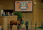 Grovendale-consigned Al's Gal sold for $950,000 to J. S. Company at the Keeneland November sale