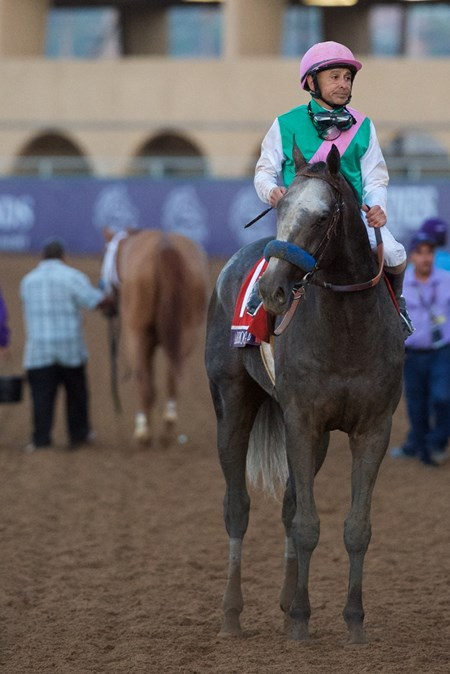 Arrogate after the Breeders Cup Classic on November 4, 2017