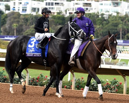 Sharp Azteca before the 2017 Breeders' Cup Dirt Mile