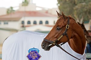 Gun Runner the morning after his Breeders' Cup Classic victory