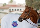 Breeders' Cup Classic winner Gun Runner