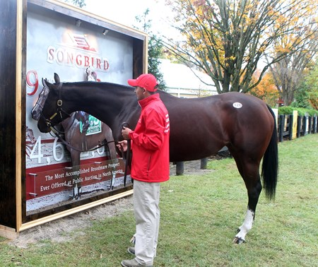 Hip 120, Songbird, 2017 Fasig-Tipton November Sale