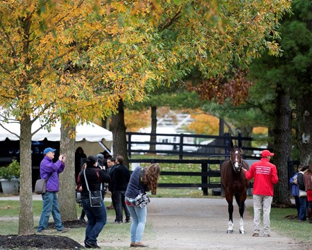 Songbird