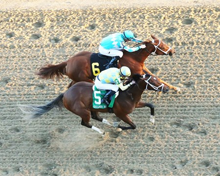 Road to Victory wins the 2017 Golden Rod Stakes