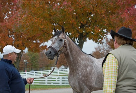 Hip 2841 Fact Finding at Kingswood Sales horses and people at Keeneland November Sales Nov. 13, 2017 Keeneland in Lexington, KY.