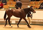 Lot 162, a Kodiac filly, topped the Nov. 27 sale at 400,000 guineas