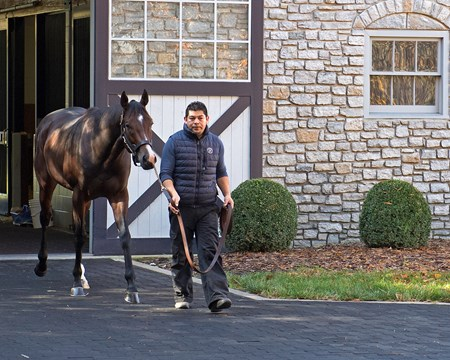 Classic Empire at Ashford Horses at the Keeneland November sale on Nov. 9, 2017 Keeneland in Lexington, KY.
