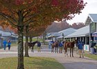 Weanlings are out for inspection during the Keeneland November breeding sale