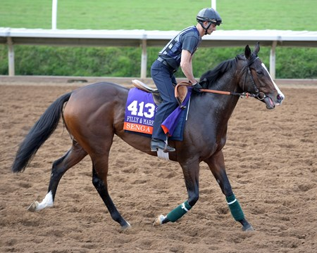 Senga Breeders' Cup horses on track at Del Mar racetrack on Nov. 1, 2017 Del Mar Thoroughbred Club in Del Mar, CA.
