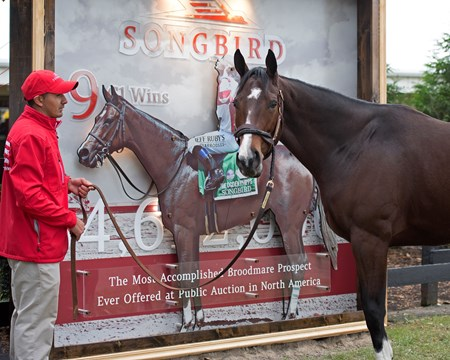 Songbird Horses at the Fasig-Tipton Kentucky November sale on Nov. 6, 2017 Fasig-Tipton in Lexington, KY.