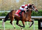 Daisy wins the Tempted Stakes at Aqueduct Racetrack