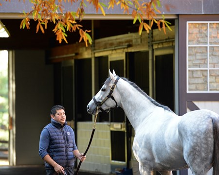 Cupid at Ashford Stud Horses at the Keeneland November sale on Nov. 9, 2017 Keeneland in Lexington, KY.