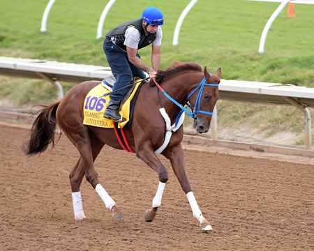 Gunnevera Breeders' Cup horses on track at Del Mar racetrack on Nov. 1, 2017 Del Mar Thoroughbred Club in Del Mar, CA.