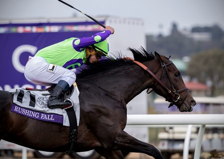 Rushing Fall wins The Breeders Cup Juvenille Fillies Turf at Del Mar on November 3rd 2017, jockey Javier Castellano up