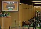 Hip 969, a colt by Verrazano, sells for $100,000 at the Keeneland November sale