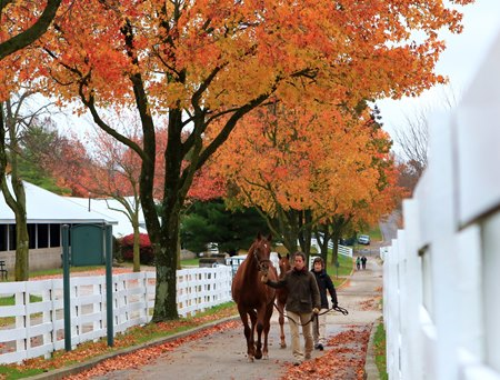 Scenics, 2017 Keeneland November Sale