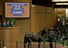 Sky Girl, a half sister to Kentucky Oaks winner Abel Tasman, sold for $1.5 million