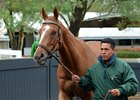 Stellar Wind at the Keeneland November sale, where she sold to Coolmore for $6 million