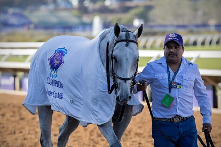 World Approval after winning the Breeders' Cup Mile at Del Mar on November 4th 2017