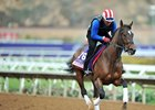 Wonder Gadot gallops ahead of her start in the Breeders' Cup