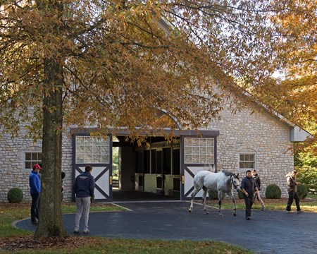 Cupid at Ashford Stud during stallion show. Horses at the Keeneland November sale on Nov. 9, 2017 Keeneland in Lexington, KY.