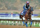 Untamed Domain gallops ahead of the Breeders' Cup at Del Mar