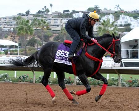 Sharp Azteca on the track at Del Mar preparing for the Breeders' Cup Dirt Mile on November 1, 2017