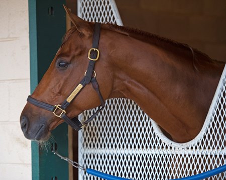 Gun Runner will line up for the last race of his career in the Jan. 27 Pegasus World Cup