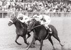 "Forty Niner (inside) won the NYRA Mile in 1988.<br><a target=""blank"" href=""http://photos.bloodhorse.com/Classics/Classic-Photos/i-XB3xjmf/A"">Order This Photo</a>"