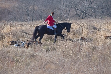 Huntsman