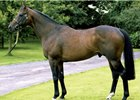 Kodiac, a son of Danehill, at Tally-Ho Stud