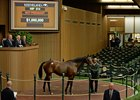 Fools in Love tops the Nov. 9 session at the Keeneland November sale with a $1 million bid from Cheveley Park Stud