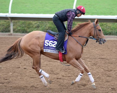 Skye Diamonds Breeders' Cup horses on track at Del Mar racetrack on Nov. 1, 2017 Del Mar Thoroughbred Club in Del Mar, CA.