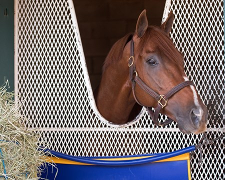 Collected and Bob Baffert at the barn the morning after his Classic win  at Del Mar racetrack on Nov. 5, 2017 Del Mar Thoroughbred Club in Del Mar, CA.