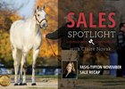 Fasig-Tipton November Sale Recap
