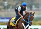 Gunnevera will train up to the $16 million Pegasus World Cup Invitational Stakes at Gulfstream Park