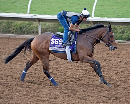 Paulassilverlining Breeders' Cup horses on track at Del Mar racetrack on Nov. 2, 2017 Del Mar Thoroughbred Club in Del Mar, CA.