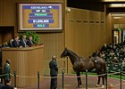 Tammy the Torpedo hammers for $1.65 million at Keeneland