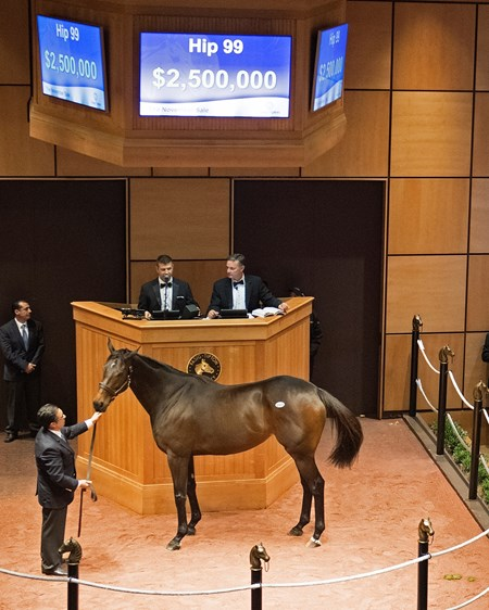 Hip 99 Miss Temple City brings $2.5 million Horses at the Fasig-Tipton Kentucky November sale on Nov. 6, 2017 Fasig-Tipton in Lexington, KY.