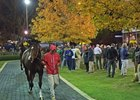 All eyes were on Songbird as the champion headed into the ring at the Fasig-Tipton November sale