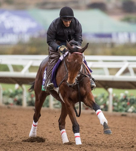 Itsinthepost out for morning exercise at Del Mar Nov. 1, 2017.