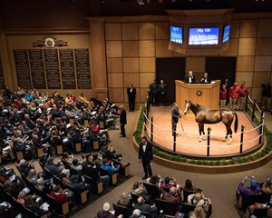 The sale of elite fillies and mares, such as Songbird for $9.5 million, added to a surge to 27% in Fasig-Tipton's share of total sales in the Kentucky mixed sales marketplace