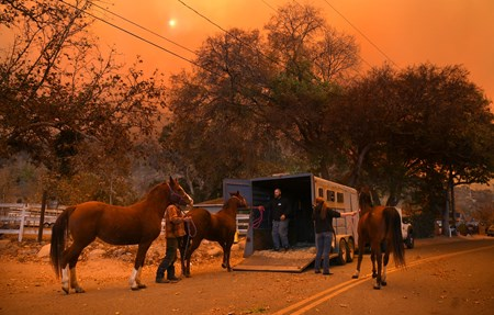 Rescue of horses in Ventura County (Thomas fire)