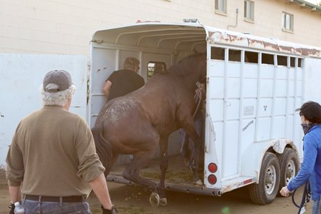 A horse is unloaded from a trailer after being evacuated from San Luis Rey Downs to Del Mar
