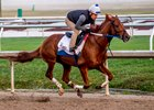 Gun Runner puts in an easy half-mile work Dec. 3 at Fair Grounds Race Course & Slots
