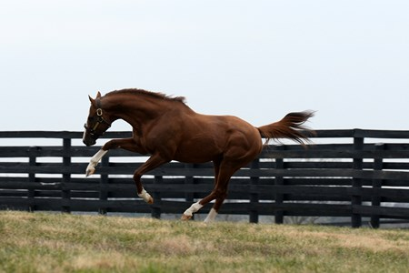 California Chrome returns to Taylor Made Farm, December 15, 2017